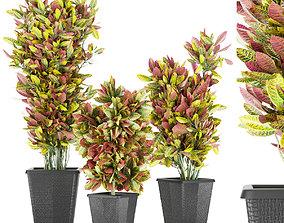 Collection plant vol 12 3D model decorationplant