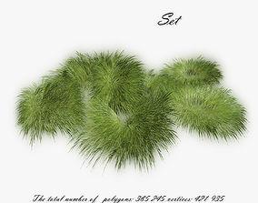 3D asset Grass Hakonechloa