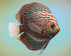 3D model Fish Symphysodon discus