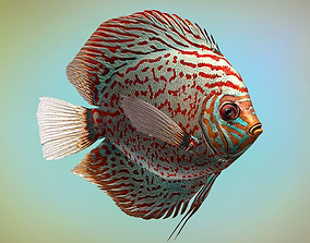 3D asset animated Fish Symphysodon discus