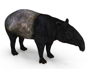 3D model Tapir