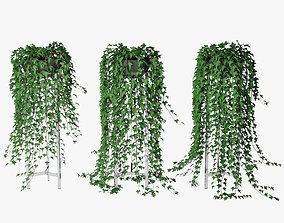 nature 3D model Ivy in pot 15