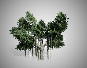 3D asset Chinese Banyan Tree
