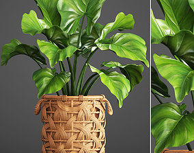 Tropical plant in pot 3D