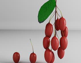 Berberis 3D asset