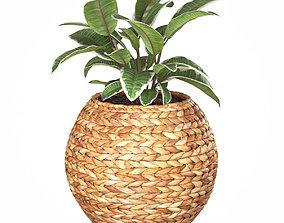 3D Wicker planter basket