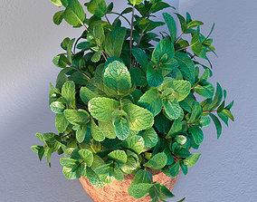 3D Mint in loft wooden pot