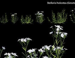 Stellaria holostea - Greater stitchwort 3D model