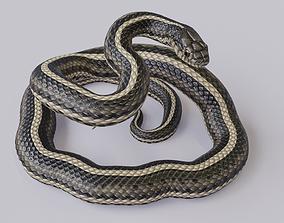 Rigged Garter Snake 3D model
