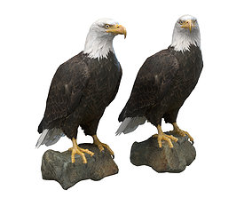 Bald Eagle 3D asset low-poly