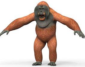 3D model Orangutan With PBR Textures