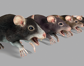 Common Rats 3D model