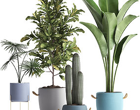 Collection of Exotic Plants 439 3D model