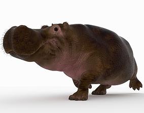 3D model Hippopotamus mouth