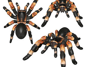 3D model rigged Tarantula