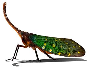 3D model Lanter Bug