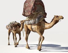 mammal Camel 3D