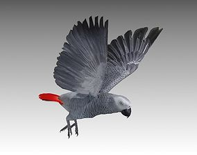 Grey Parrot Animated 3D asset