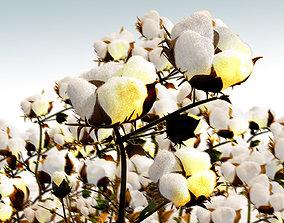 Cotton 3D