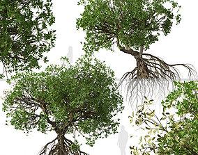 Set of Rhizophora apiculata or Mangrove Trees - 2 Trees 3D