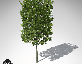 XfrogPlants European Hornbeam 3D model