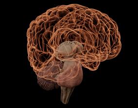 3D model High Resolution 8k Human Brain System Pack