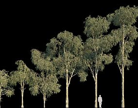 tree Eucalyptus Globulus 3D model