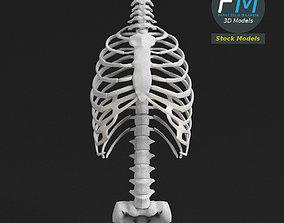 3D model Anatomy Human spine torso and rib cage