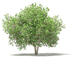 Common Fig Tree with Fruits 3D model tree