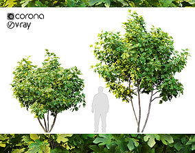 3D model nature Two fig tree