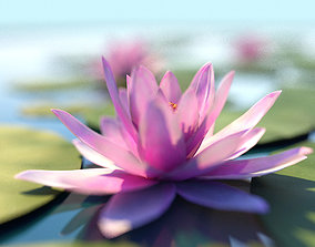 Water Lily Lotus Plant 3D asset