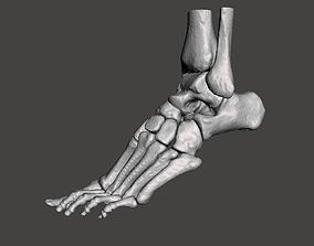 Left Foot - male 3D model