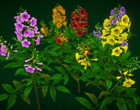 Flower Bahamas 3D model