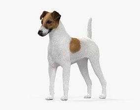 Fox Terrier HD 3D model