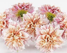 Garden Dahlia Pink 3D asset low-poly