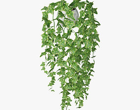 3D model ivy in pot 02