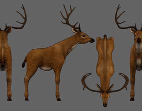 Deer animal 3D asset