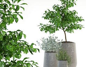 Plants collection 82 Garden life pots 3D model planter