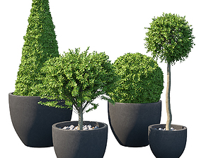 3D model Street bush in a box III boxwood