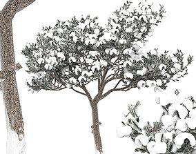 3D Pine 8