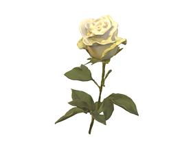 3D Fw5 - White Rose