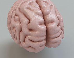 cerebellum 3D Human Brain