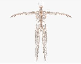 3D Female Lymphatic System