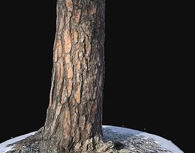 Pine trunk with snow 3 3D model