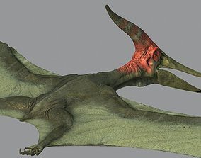 Pterodon animations 3D model