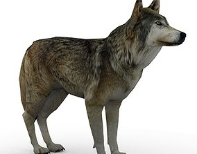 Timber Wolf Animated 3D asset