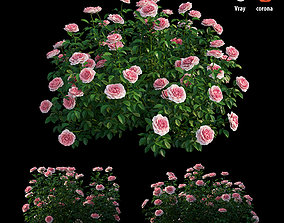 3D Rose plant set 24