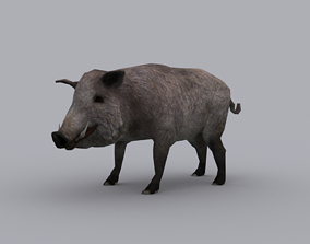 BOAR GAME READY ANIMATED MODEL 3D asset