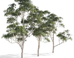 3D model Eucalyptus collection 1