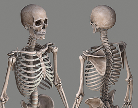 3D asset low-poly Human Skeleton Caucasian Male